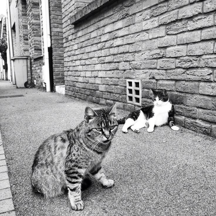 Gangsta streetcat and his biatch - Rosendaël