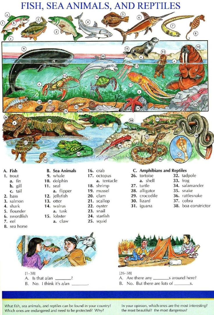 115 - FISH, SEA ANIMALS, AND REPTILES - Pictures dictionary - English Study, explanations, free exercises, speaking, listening, grammar lessons, reading, writing, vocabulary, dictionary and teaching materials
