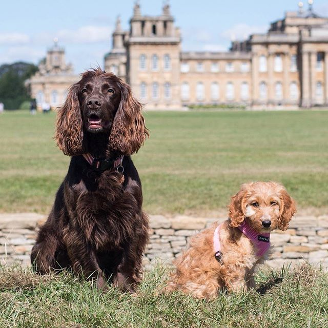 Take Your Pup On A Grand Day Out In The Cotswolds Visit The Monumental English Country Ho Dog Friendly Holiday Cottages Holiday Cottage English Country House