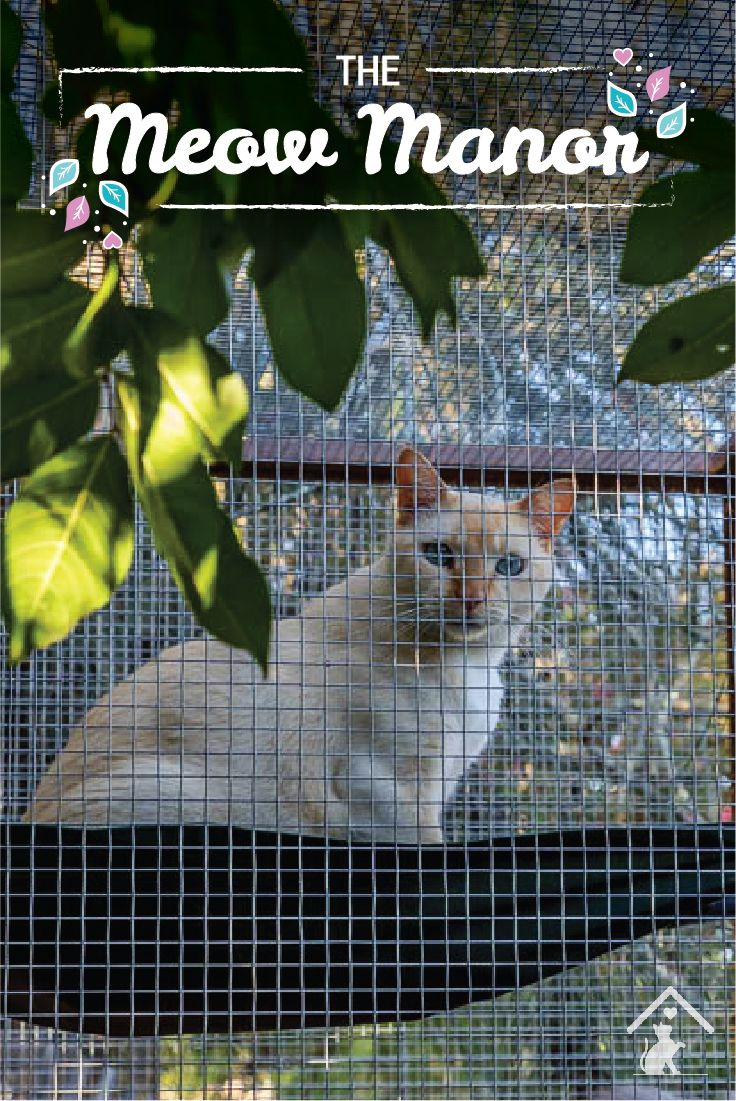 Worried about your outdoor cats safety, but don't want to keep them cooped up indoors? With the Meow Manor, you will have piece of mind knowing your cats can enjoy the great outdoors safely and comfortably. Click the image to find out more. #meowmanor #outdoorcatenclosures #backyardcatenclosures