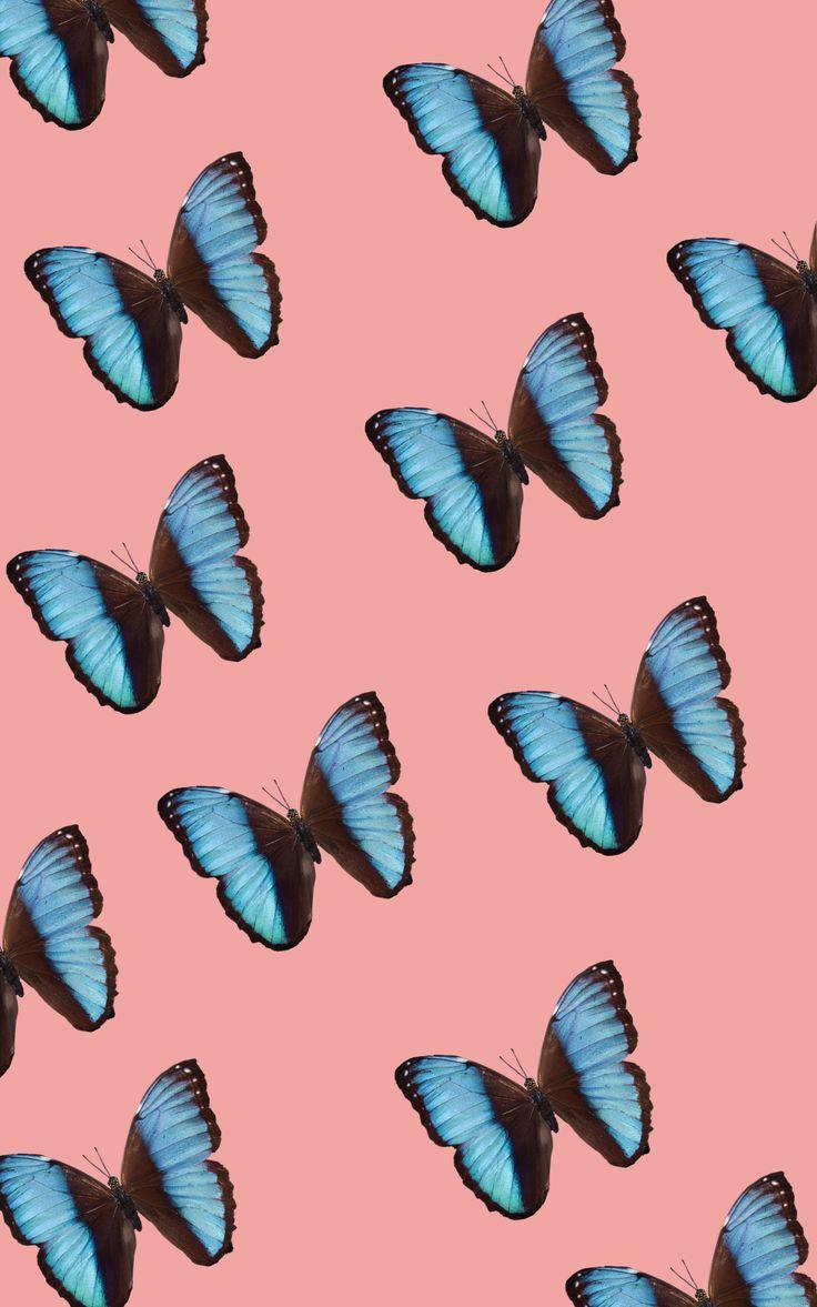 butterflies   iPhone background   Blue butterfly wallpaper ...