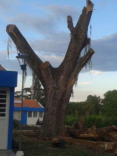 Deforestación #Cartago #Pereira #EjeCafetero