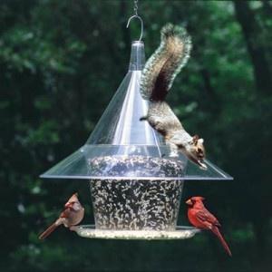 how-to-squirrel-proof-bird-feeder