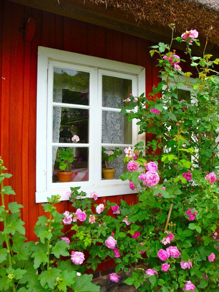 Swedish cottage. | Så här ser den typiska svenska stugan ut för mig. Med spetsgardiner i fönstret och med Mårbacka-pelargoner på fönsterbrädan. Härligt doftande och rosa rosor utanför, och jag tror bestämt det även finns stockrosor intill. HÄRLIGT !