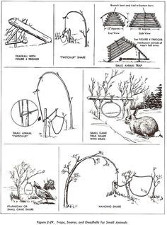 snares and traps- Everybody ought to know this and concerning the edible crops (and be .... >>> Find out more at the photo