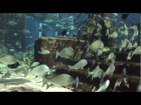 Visit Dubai's Aquarium of choice, The Lost Chambers, at Atlantis The Palm Hotel, Dubai. Explore an amazing underwater world surrounded by 65,000 marine animals in one exquisite aquarium.