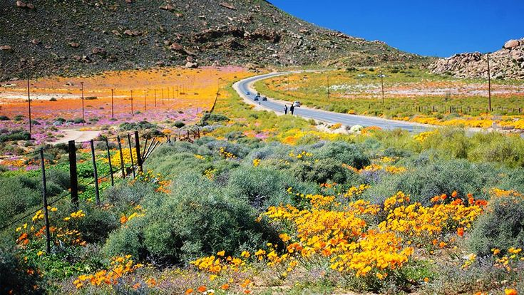 Namaqualand Tourism, South Africa - Next Trip Tourism