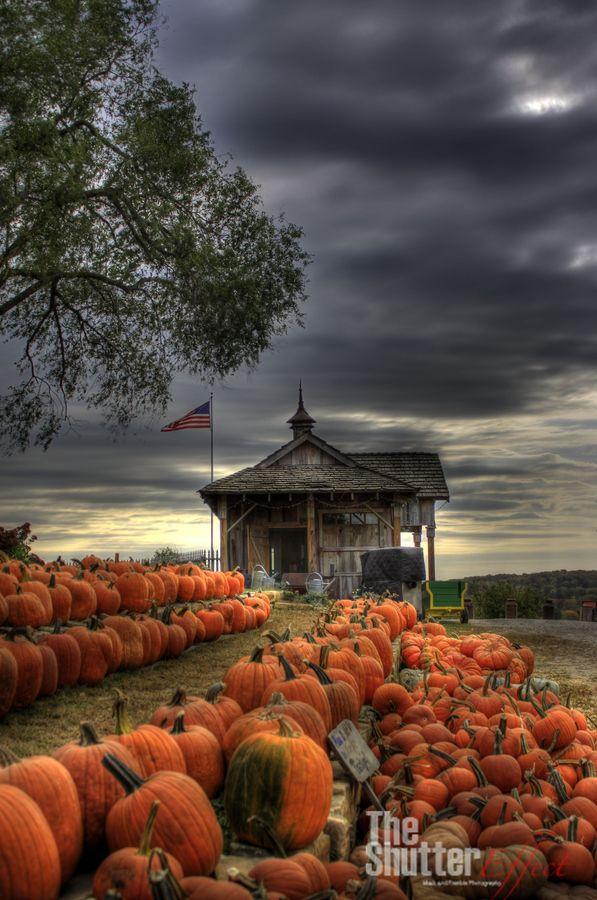 Pumpkin patch under a stormy autumn sky.