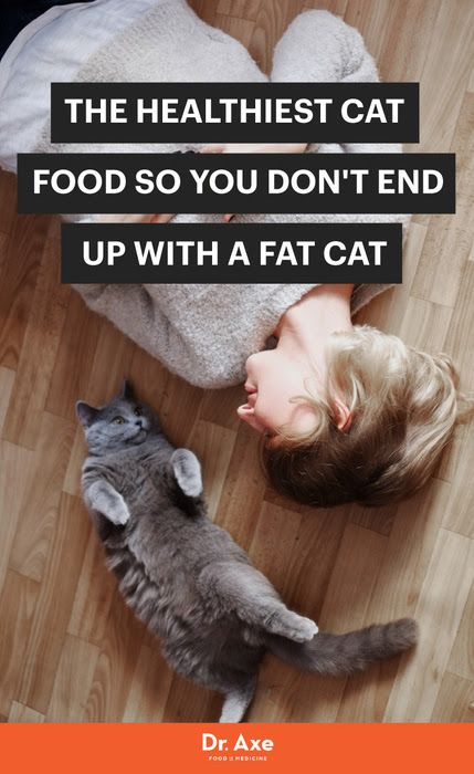Best Healthy Cat Food Ideas On Pinterest Homemade Cat Food - Meatball the fat cat kept eating everyones food so his owners came up with a clever solution