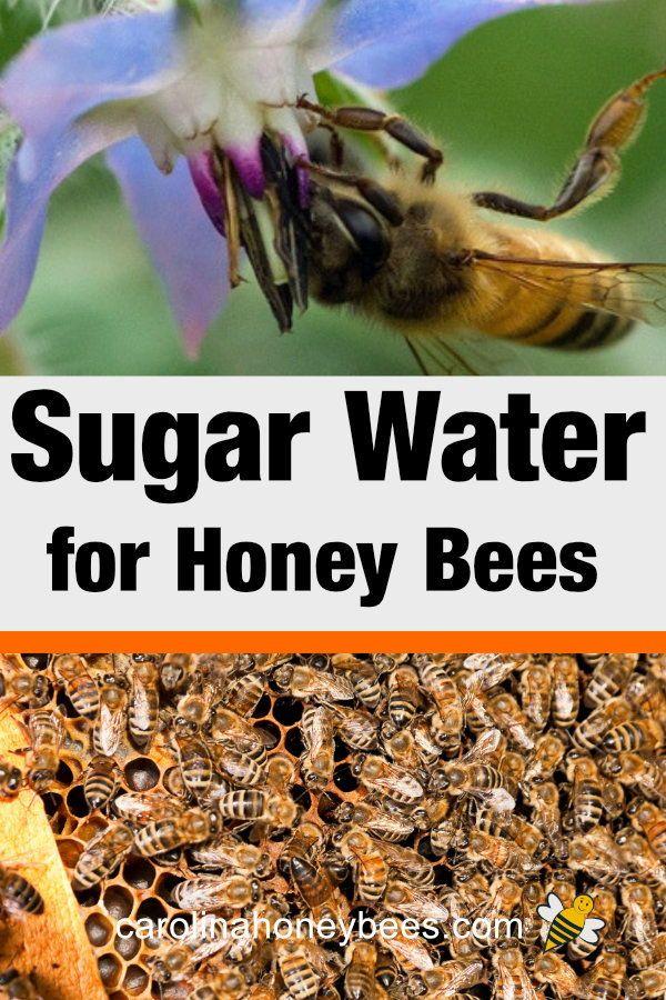 Feeding Bees Sugar Water How Why Bee Bee Keeping Feeding Bees