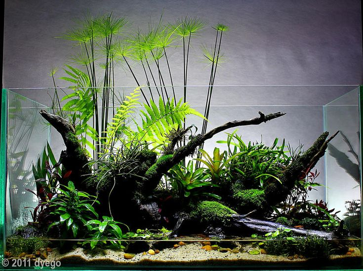 Water line? What water line? When I talk about paludariums I often mention  an - 362 Best Aquarium / Terrarium At Home Images On Pinterest