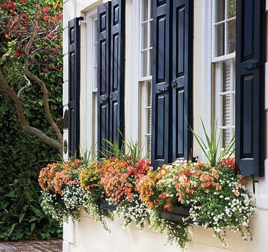 Window boxes: Blue Shutters, Navy Shutters, Windowbox, Charleston Sc, Window Flowers Boxes, Black Shutters, Colors Combinations, House, Window Boxes