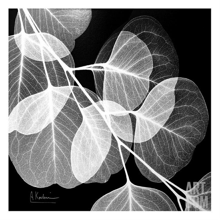 Eucalyptus Black and White • Albert Koetsier