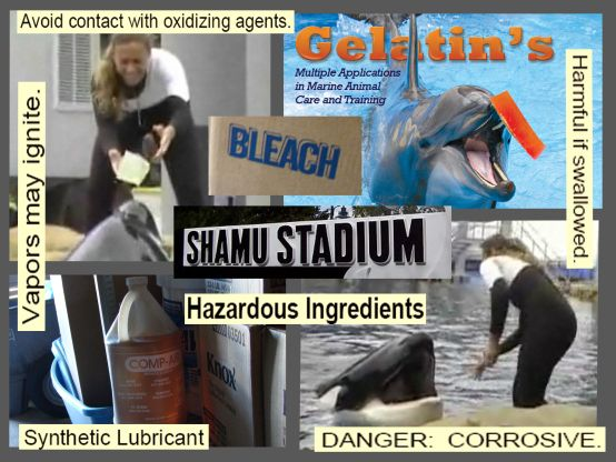 Investigation Finds Hazardous Chemicals with Killer Whale Food Supply at SeaWorld ~ February 28, 2012