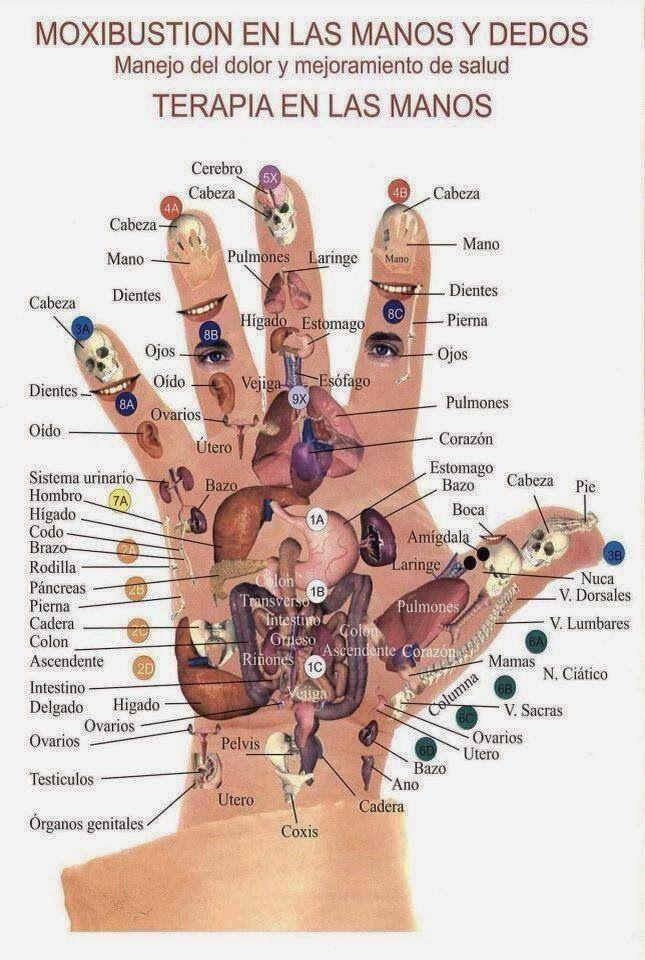 La reflexología de manos se destaca por ser una técnica de masajes en las manos, que,  a diferencia de la reflexología podal, ésta pued...