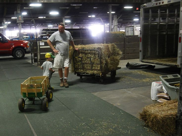 Tucker Simmons (3) helps his grandfather Ron Simmons with hay as they get ready to bring their cows to the Kentucky State Fair at the Fair a...