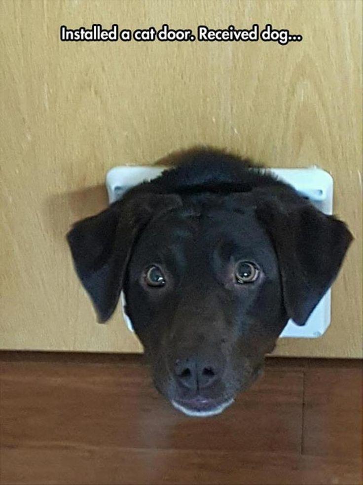 Quiznos Funny Meme : Best images about dog memes on pinterest