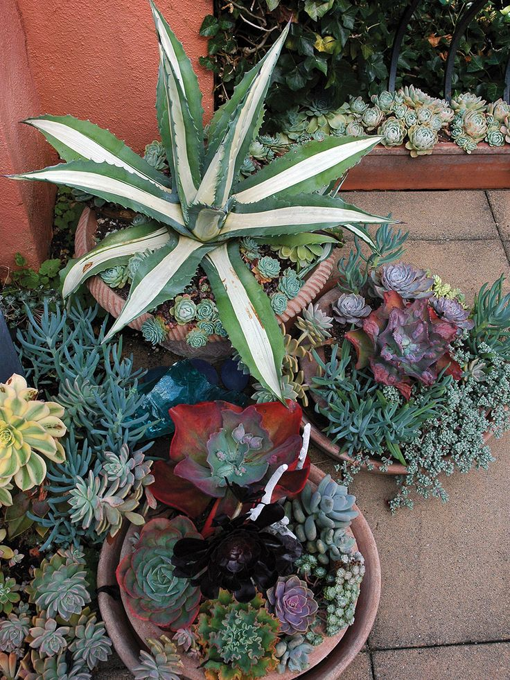 Images about bromeliads succulents on