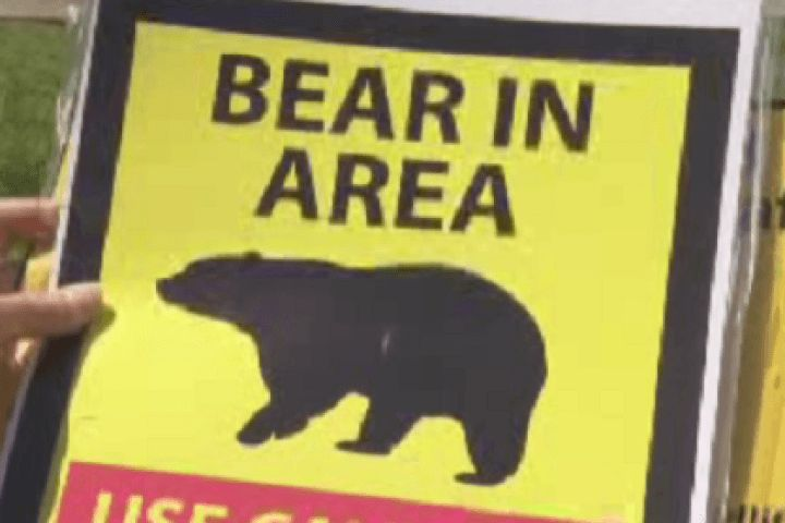 awesome Canadian News - Bear attack in Water Valley area northwest of Calgary #News in #Canada
