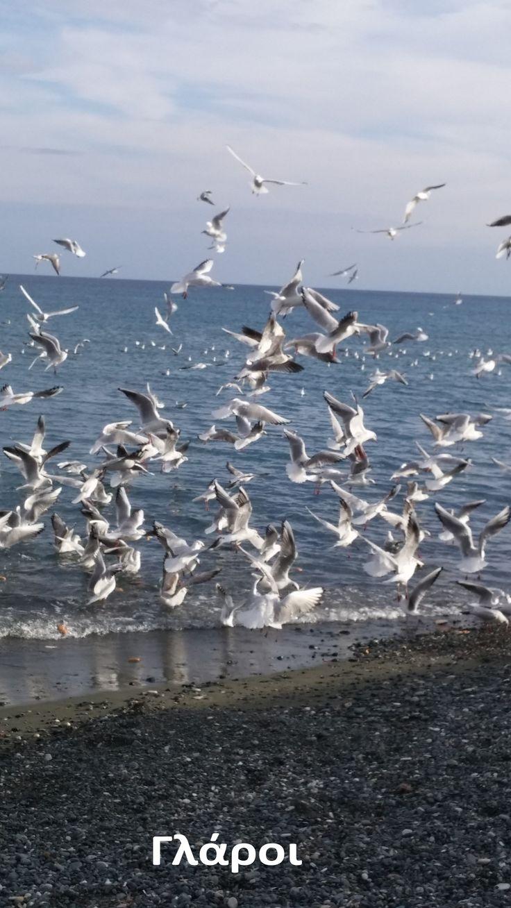 Παραλία-Γλάροι-Λεμεσός