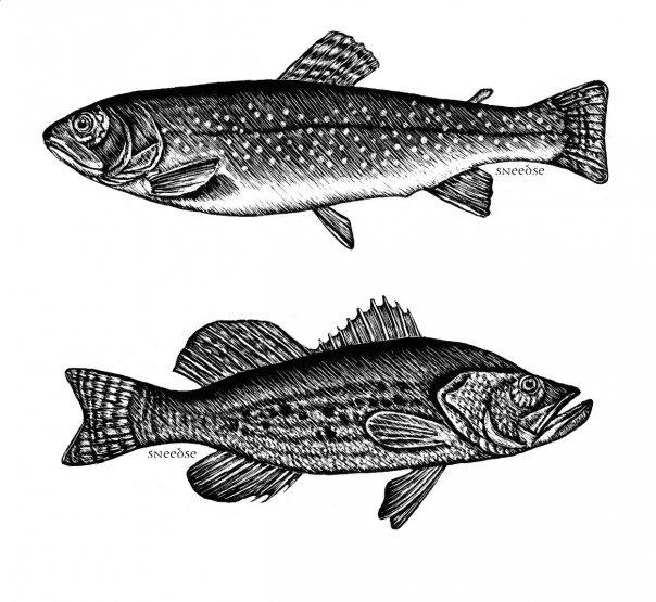 Fish II. Scratchboard on Behance