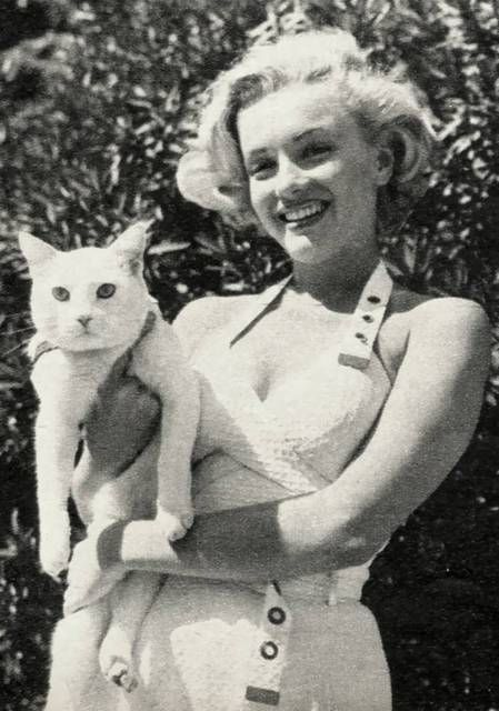 Marilyn Monroe: Marilyn Monroe, Famous People, Pet Memories, Norma Jeans, Pet Pictures, Marylin Monroe, Persian Cat, Cat Lady, White Cat