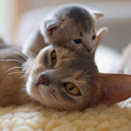 Mama and her baby