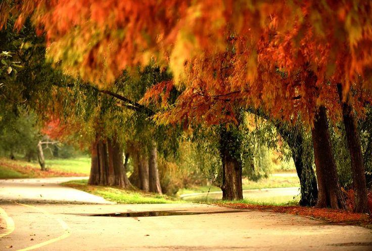 Parcul Tineretului, Bucuresti, RO (photo by Aurel Rapa)
