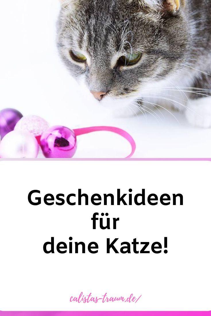 Anzeige Weihnachten Mit Katzen Zookauf Shop Katzen Geschenke Fur Katzen Zoo