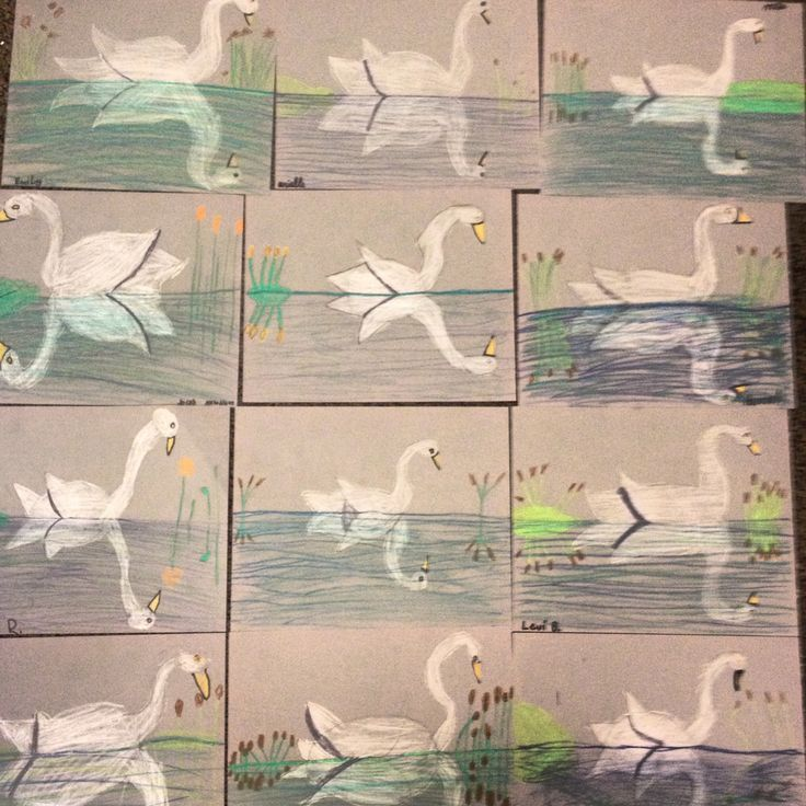 I use a grey card stock for this project, it is necessary because of the white swan. I also use Crayola Construction Paper Crayons. We begin with the horizon line and then draw the oval swans body ...