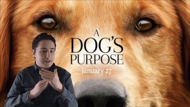 Film Review: A Dog's Purpose by KIDS FIRST! Film Critic Gerry O. #KIDSFIRST! #ADogsPurpose