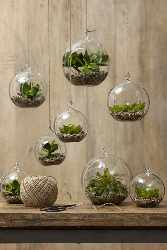 Succulents in the eye-catching glass – creative decoration ideas with plants – Khim Borns