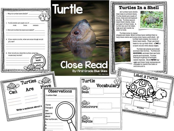 Turtle Close Read FREEBIE | First Grade Blue Skies