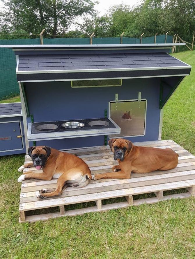 This dog house certainly shows the sheer love and compassion for your pets. You just couldn't compromise in taking the best care of your dogs and you got them this decent pallet wood repurposed dog house along with the dog food container. So this is a perfect shelter for your beloved pets.