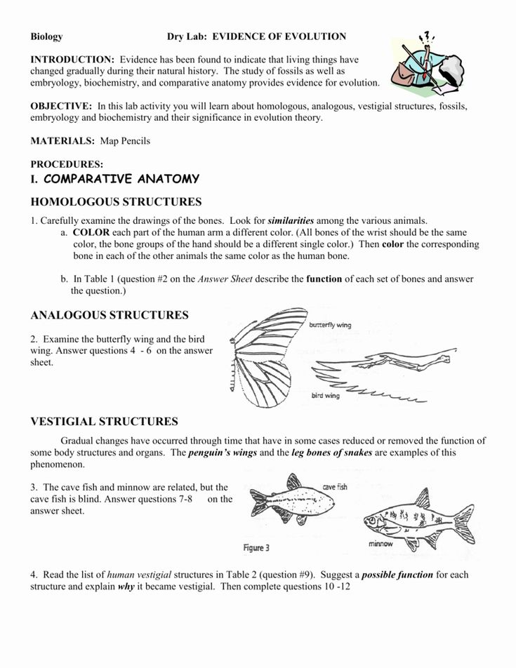 Evidence Of Evolution Worksheet Answers Beautiful ...