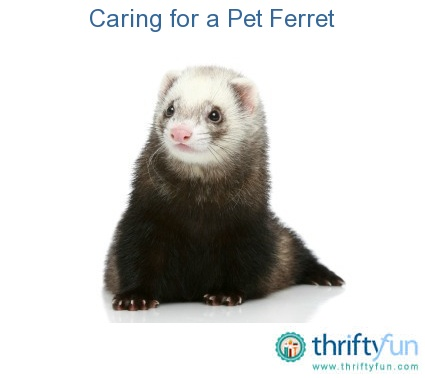 Awesome Ferret Color Chart funny cool ferret playing saxophone
