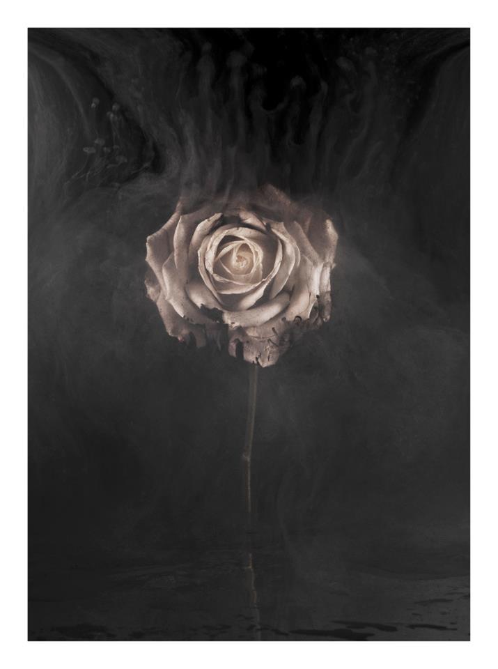 Charles Emerson, White Rose II