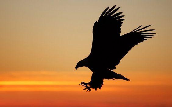 Eagle Silhouette Eagle Silhouette Item 2 Eagle Silhouette Flying Eagle: