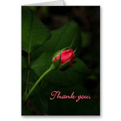Purely Pink Rosebud Thank You Card
