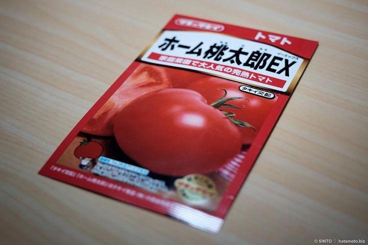 残念ながらアイススノーミニトマトは発芽せず気を取り直して桃太郎行ってみよう 詳しくはブログに書きました #ベランダ菜園 #トマト栽培 #家庭菜園 #菜園 #桃太郎 #トマト #tomato