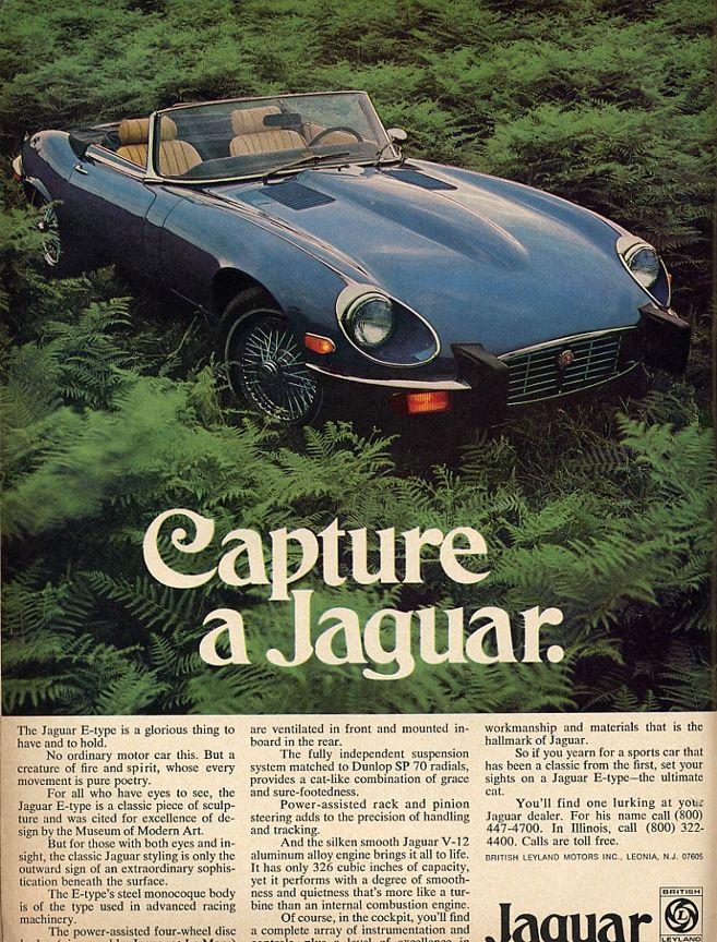 Capture a Jaguar
