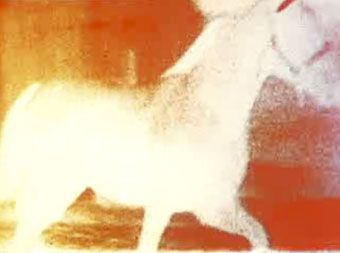 Malcolm Le Grice, Berlin Horse, 1970; hypnotic minimalism, found footage of exercising horses in a series of loopings and filterings that push the degraded images to a point of textured abstraction. xo.