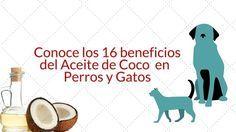 ACEITE DE COCO PARA MASCOTAS  ¿Sabías que el aceite de coco también puede ser beneficiosa para nuestras #mascotas? Te recomiendo este artículo #vegetariano, #vegano, #perros, #gatos