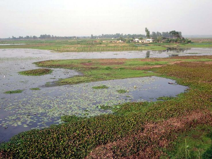 The Hail Haor Wetland Sanctuary near Srimongal, Bangladesh, provides a refuge for waterbirds and aquatic plants.