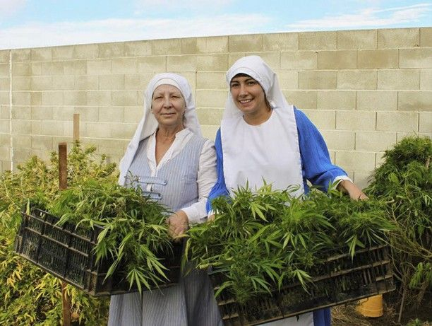 """Les soeurs pétard ces """"religieuses"""" qui font pousser des plants de #cannabis en #Californie - The Sisters of the Valley nuns are on a divine mission to heal everyone with their medicinal marijuana. Sister Kate and Sister Darcy who live in a three-bed abbey in Merced #California #USA grow cannabis from their garage. They use the cannabinoids found in the plant to create a variety of products used to treat pain. Since they launched the business six months ago the nuns treatments have proved…"""
