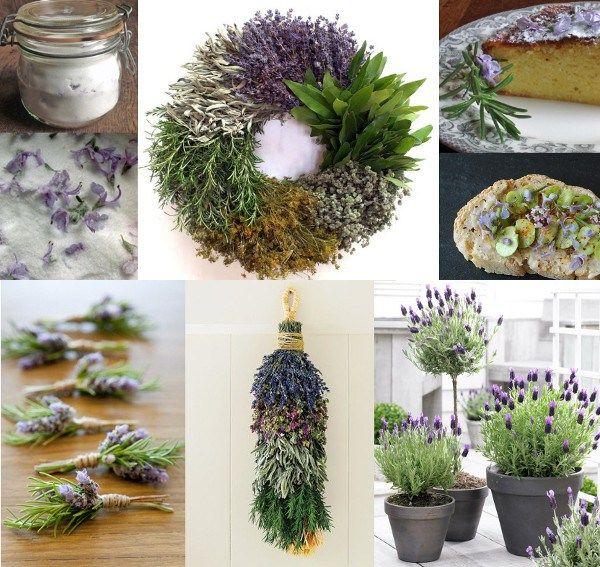 Recetas con flores de romero: 15 usos e ideas