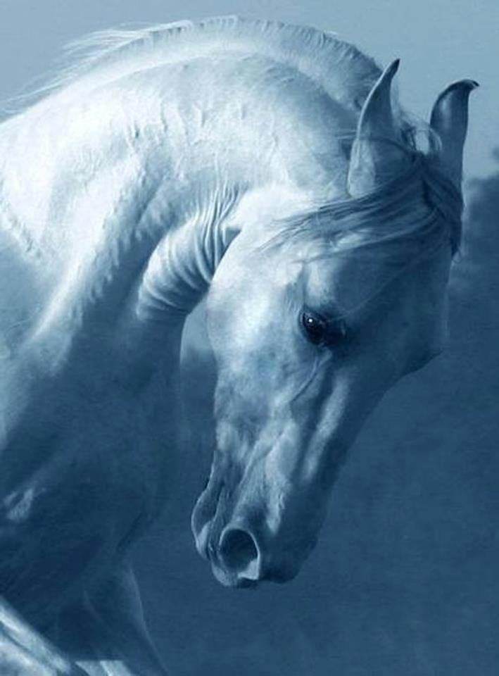 T £ B   ( chevaux )