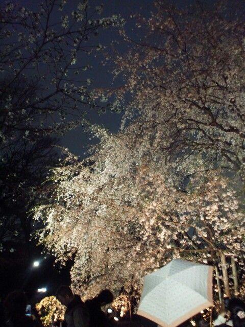 桜 六義園