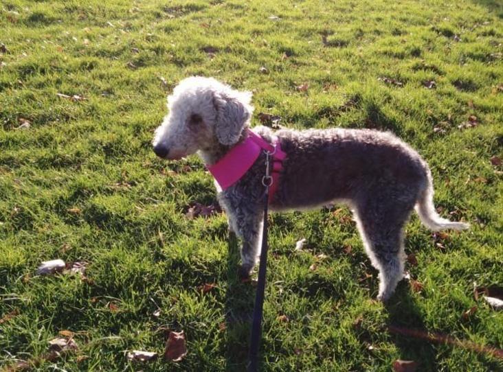 Tess Find A Pet Rspca Org Uk Pets Animals Terrier