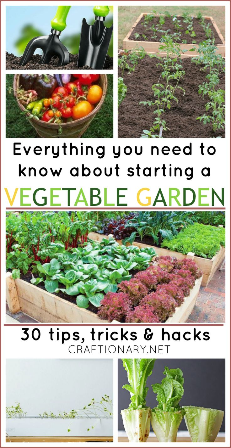1141 best garden tips images on pinterest for Indoor vegetable gardening tips